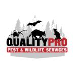 Mount Vernon Wildlife Removal